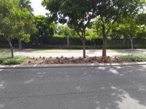 1.5.18 back order planting Marina Blvd (2)