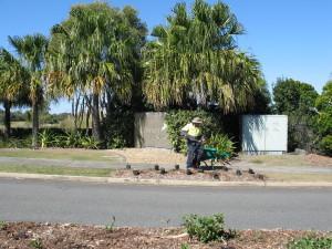 11 Aug 2015 Osprey planting (2)