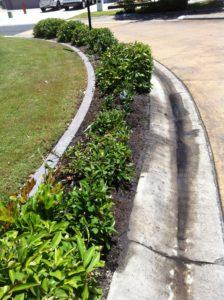 14.11.17 Kakadu street planting (14)