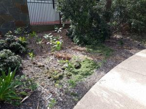 2018 10 08_North Point Park Nth Grass Clippings
