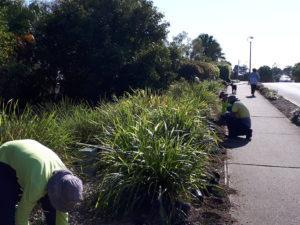 23.8.18 Planting Eagles Landing Osprey Island (19)